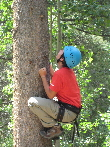 Tree climbing at Camp Tahosa